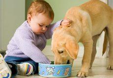 تاثیر بازی با حیوانات خانگی برای کودکان